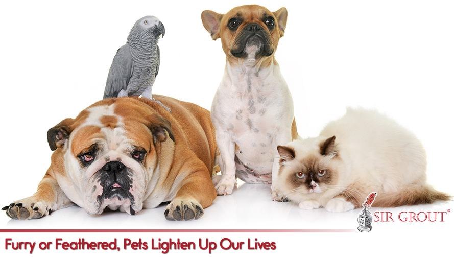 Furry or Feathered, Pets Lighten Up Our Lives